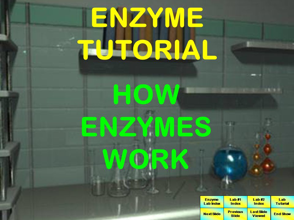 ENZYME TUTORIAL HOW ENZYMES WORK