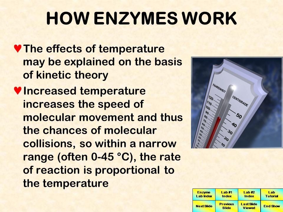HOW ENZYMES WORK The effects of temperature may be explained on the basis of kinetic theory.
