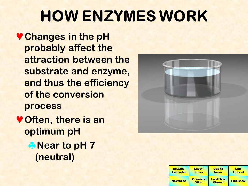 HOW ENZYMES WORK Changes in the pH probably affect the attraction between the substrate and enzyme, and thus the efficiency of the conversion process.