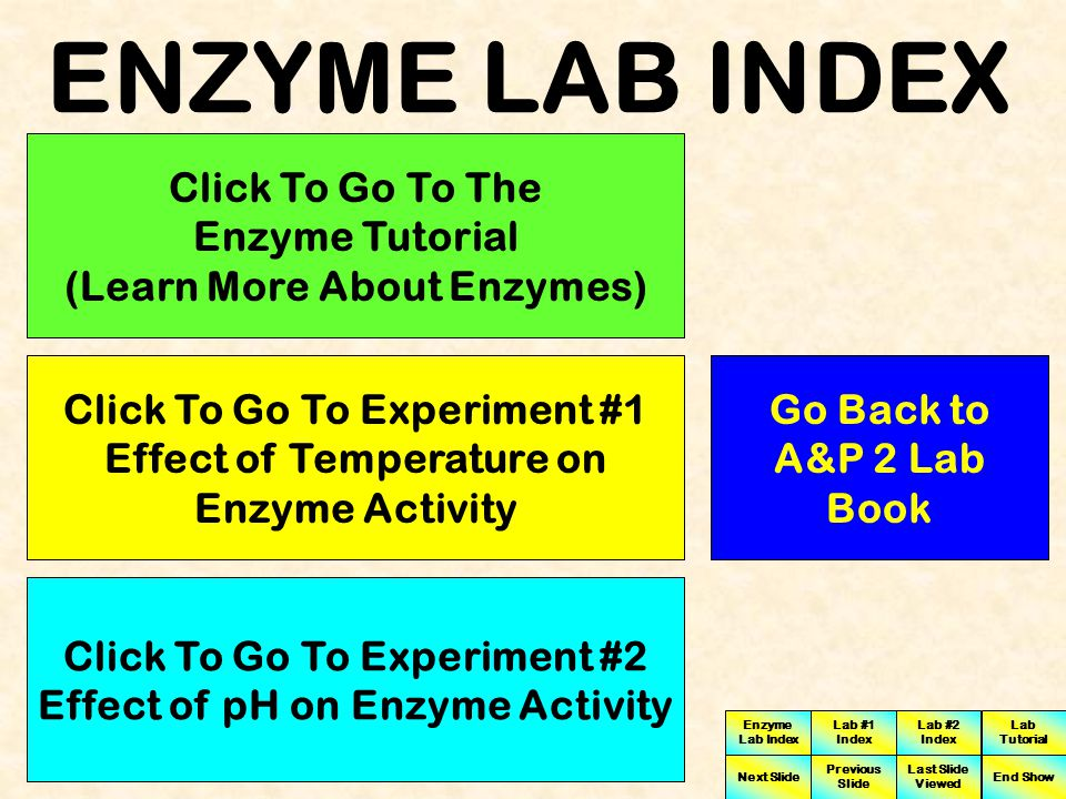 ENZYME LAB INDEX Click To Go To The Enzyme Tutorial (Learn More About Enzymes) Click To Go To Experiment #1 Effect of Temperature on Enzyme Activity.