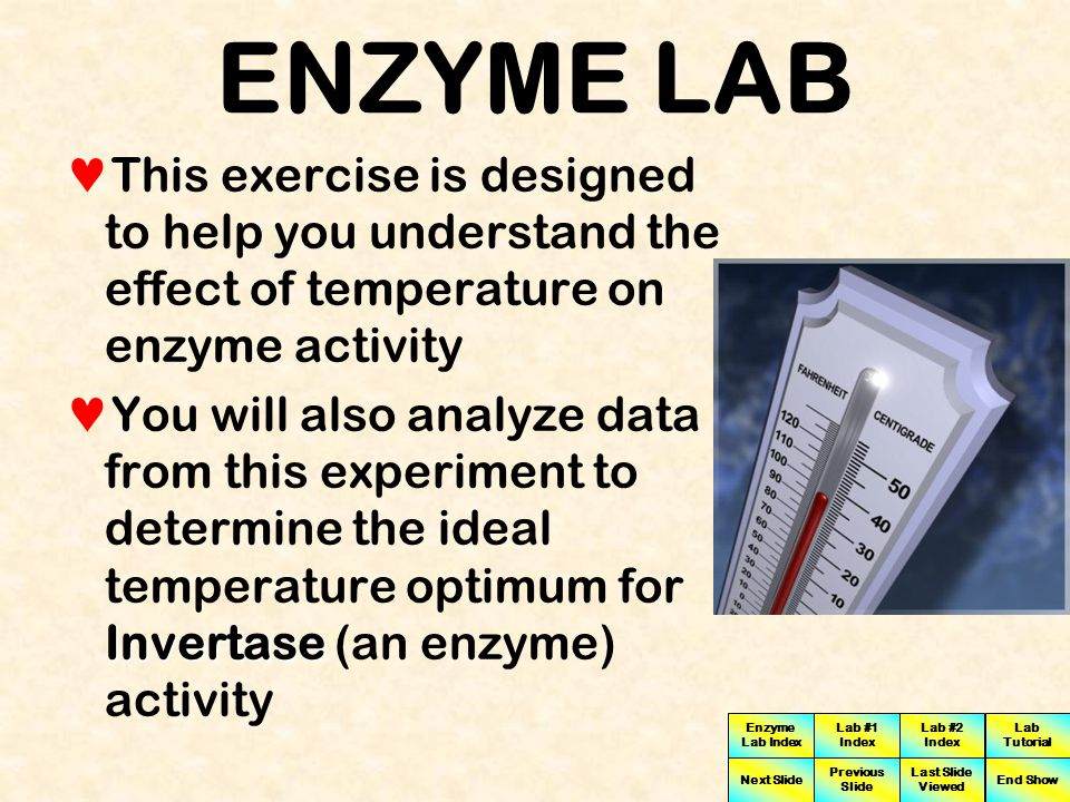 ENZYME LAB This exercise is designed to help you understand the effect of temperature on enzyme activity.