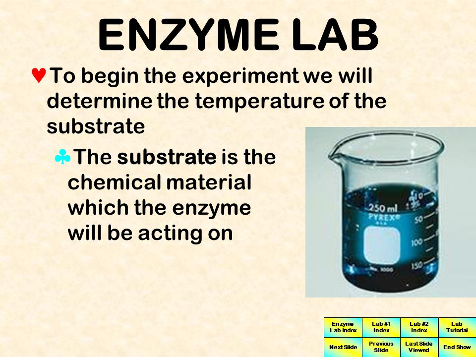 ENZYME LAB To begin the experiment we will determine the temperature of the substrate.