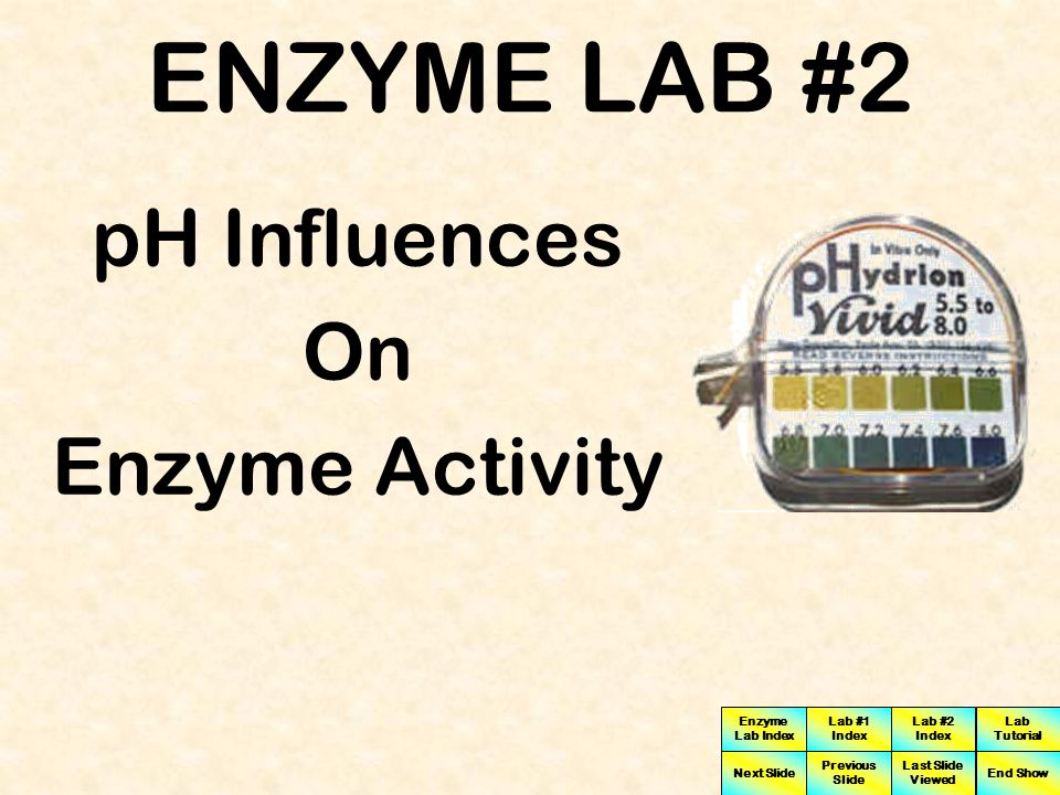 ENZYME LAB #2 pH Influences On Enzyme Activity