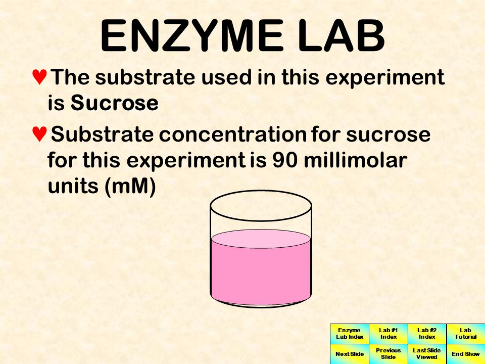 ENZYME LAB The substrate used in this experiment is Sucrose