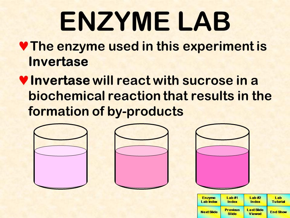 ENZYME LAB The enzyme used in this experiment is Invertase