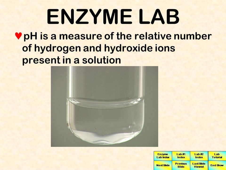 ENZYME LAB pH is a measure of the relative number of hydrogen and hydroxide ions present in a solution.