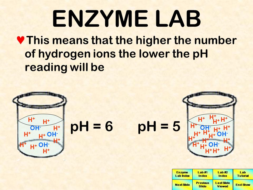 ENZYME LAB This means that the higher the number of hydrogen ions the lower the pH reading will be.