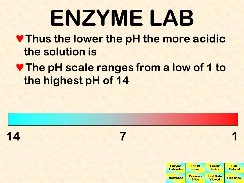 ENZYME LAB Thus the lower the pH the more acidic the solution is. The pH scale ranges from a low of 1 to the highest pH of 14.