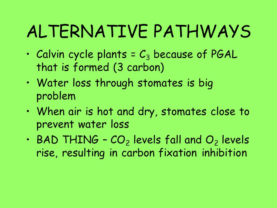 ALTERNATIVE PATHWAYS Calvin cycle plants = C3 because of PGAL that is formed (3 carbon) Water loss through stomates is big problem.
