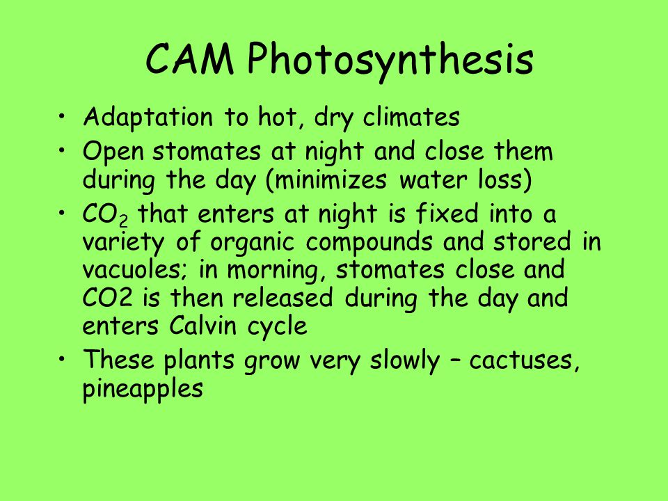 CAM Photosynthesis Adaptation to hot, dry climates
