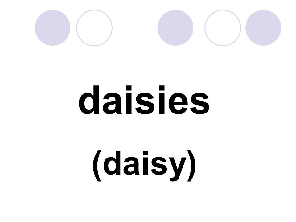 daisies (daisy)