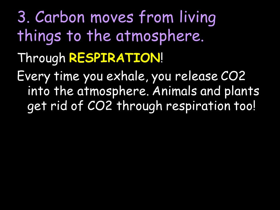 3. Carbon moves from living things to the atmosphere.