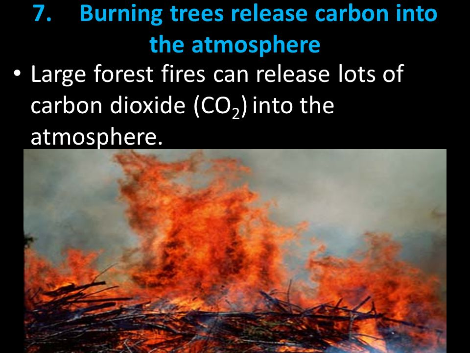 7. Burning trees release carbon into the atmosphere