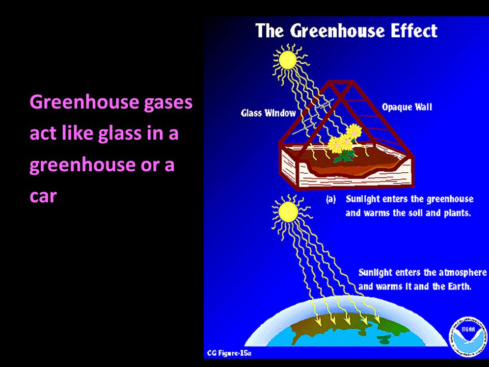 Greenhouse gases act like glass in a greenhouse or a car