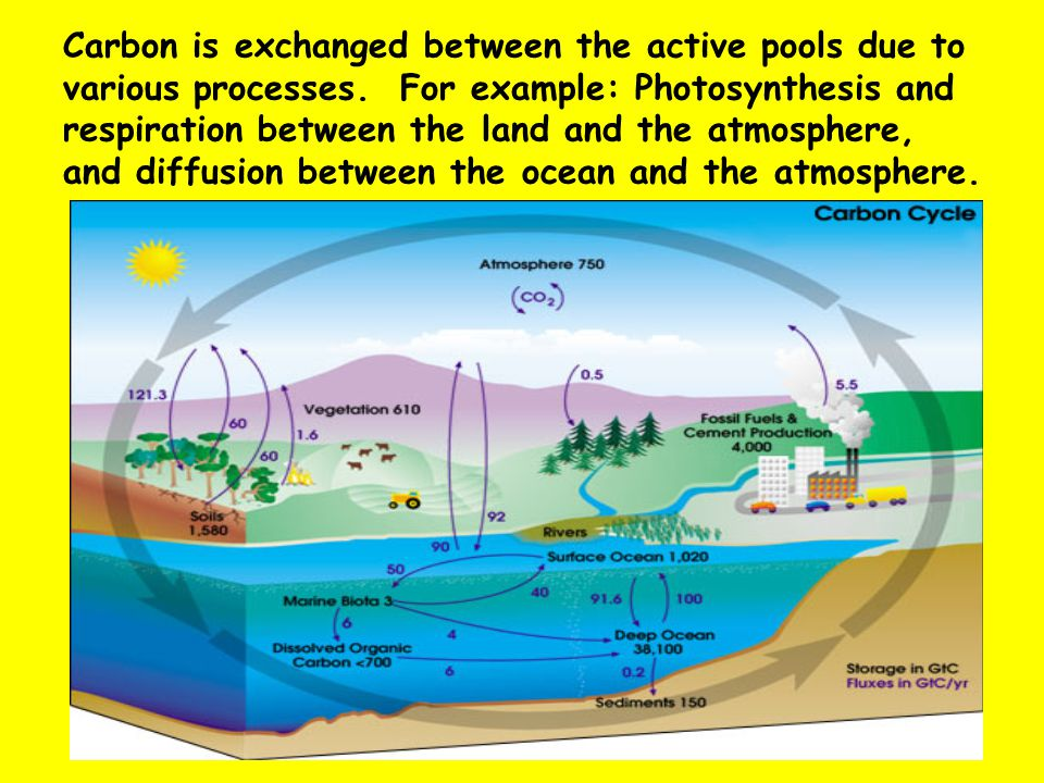Carbon is exchanged between the active pools due to various processes