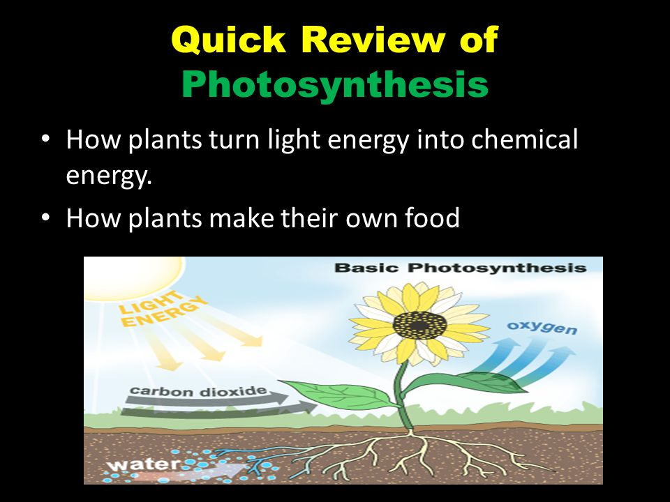 Quick Review of Photosynthesis