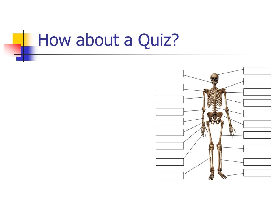 How about a Quiz