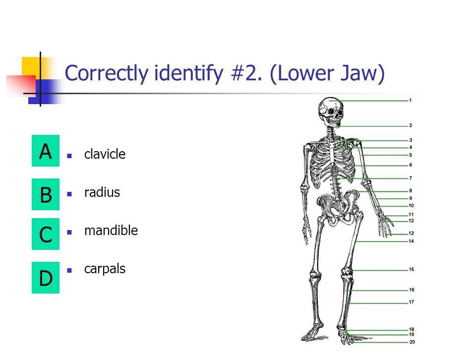 Correctly identify #2. (Lower Jaw)