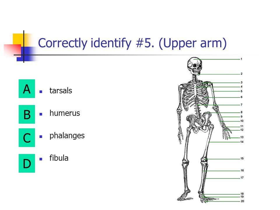 Correctly identify #5. (Upper arm)