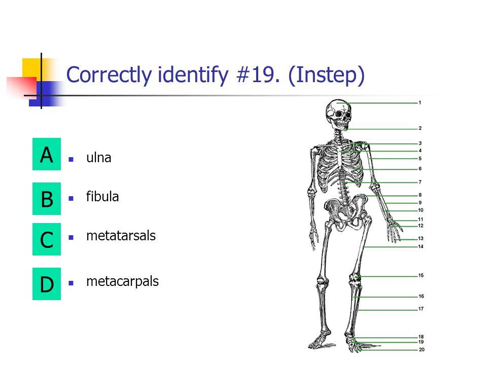 Correctly identify #19. (Instep)