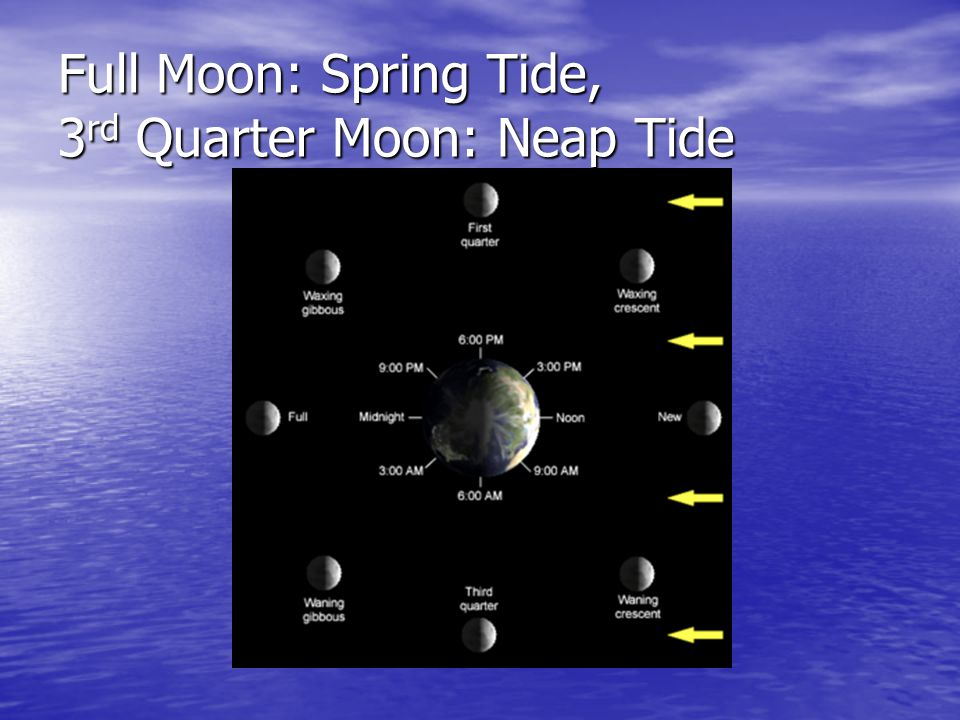 Full Moon: Spring Tide, 3rd Quarter Moon: Neap Tide