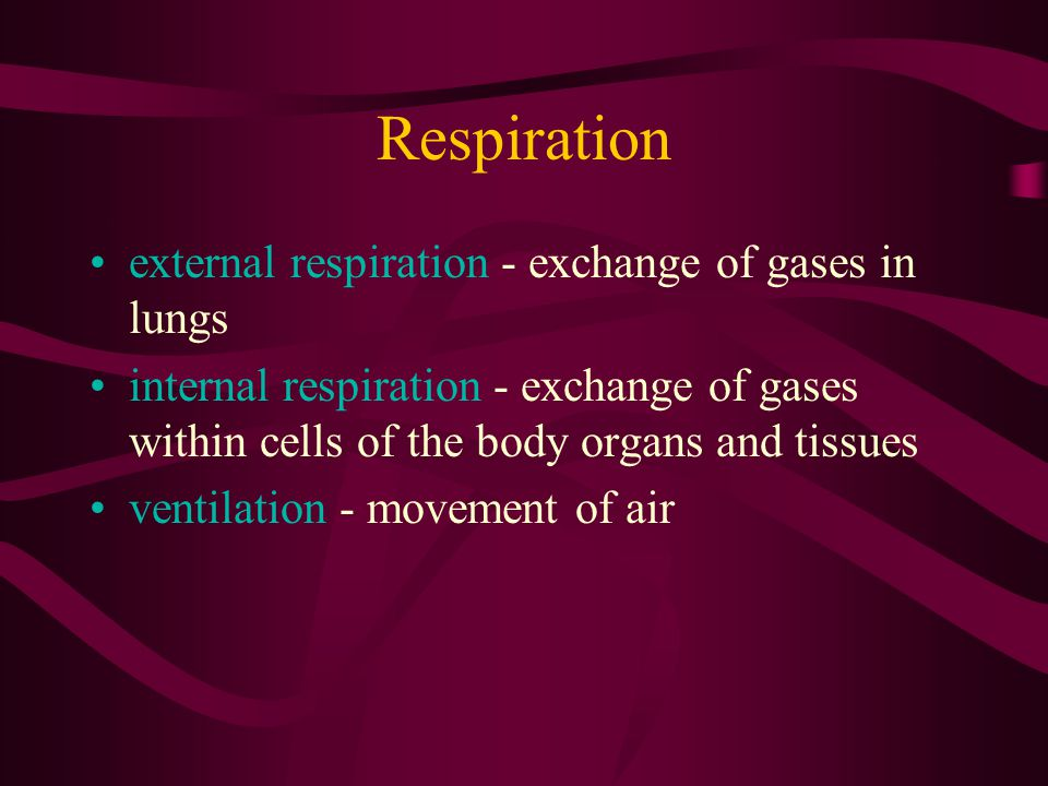 Respiration external respiration - exchange of gases in lungs