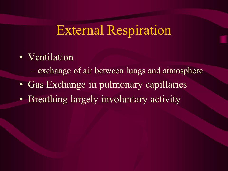 External Respiration Ventilation Gas Exchange in pulmonary capillaries