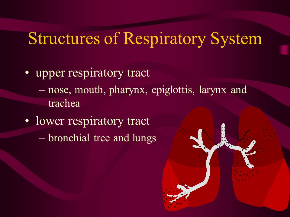 Structures of Respiratory System