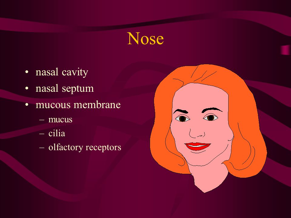 Nose nasal cavity nasal septum mucous membrane mucus cilia