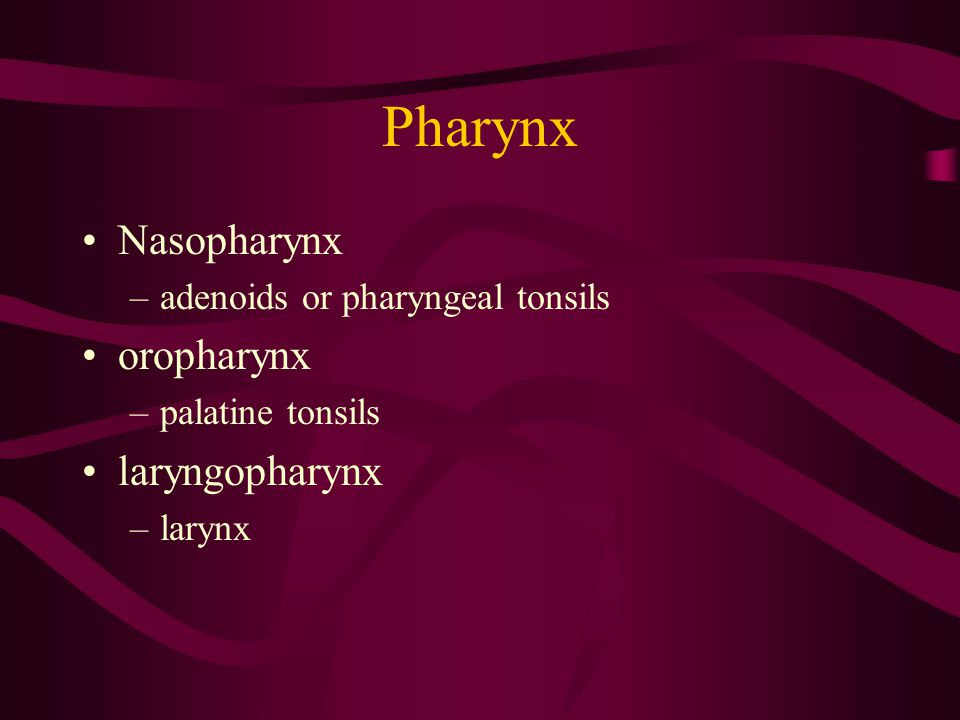 Pharynx Nasopharynx oropharynx laryngopharynx