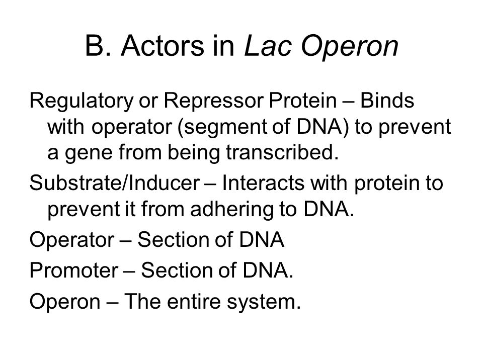 B. Actors in Lac Operon Regulatory or Repressor Protein – Binds with operator (segment of DNA) to prevent a gene from being transcribed.