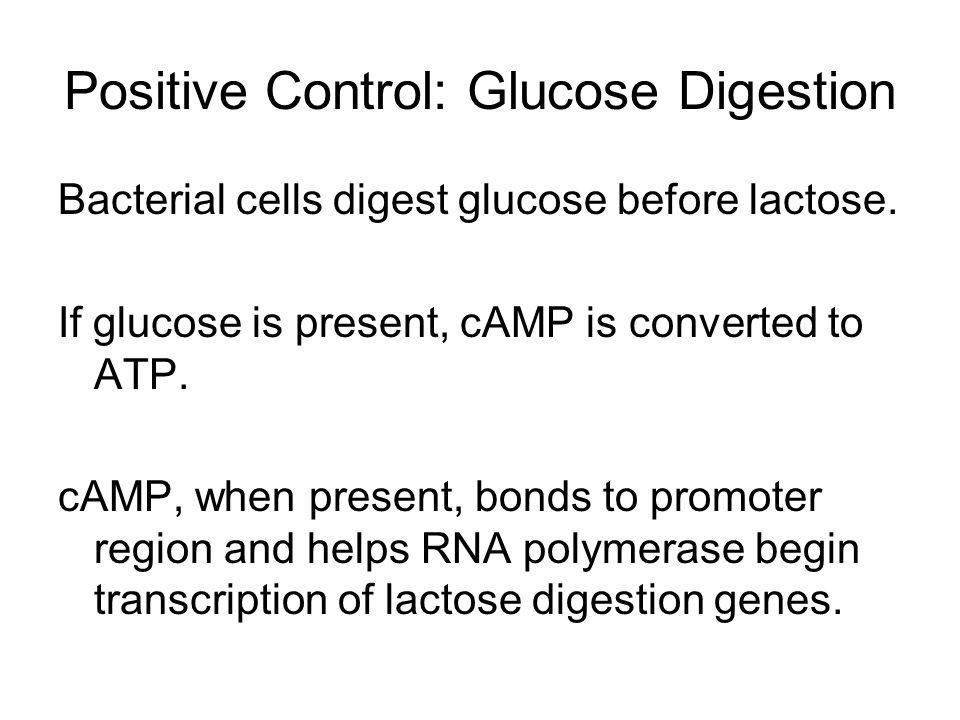 Positive Control: Glucose Digestion