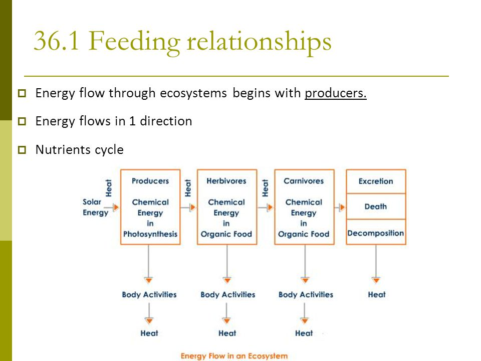 36.1 Feeding relationships
