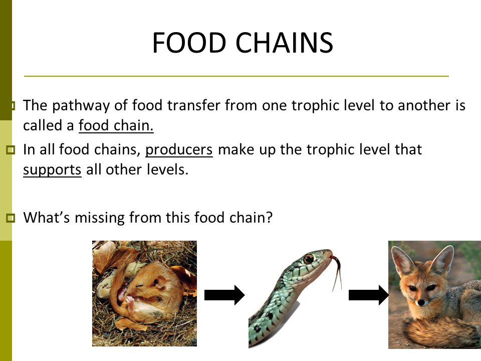 FOOD CHAINS The pathway of food transfer from one trophic level to another is called a food chain.