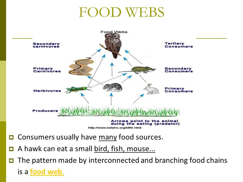 FOOD WEBS Consumers usually have many food sources.