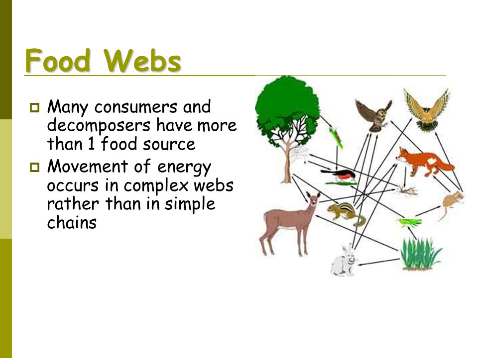 Food Webs Many consumers and decomposers have more than 1 food source