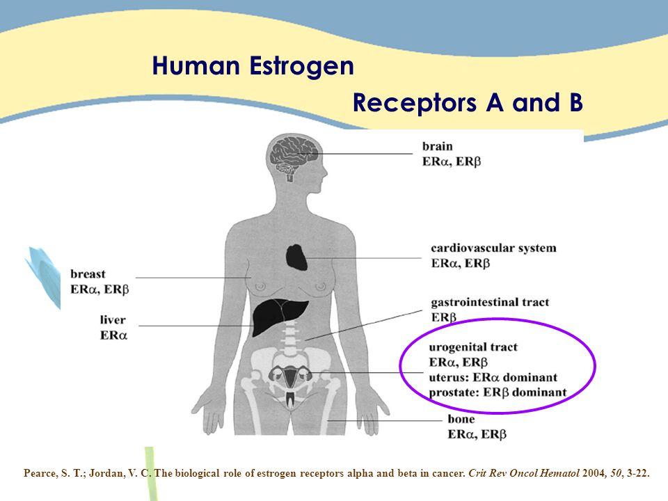Human Estrogen Receptors A and B