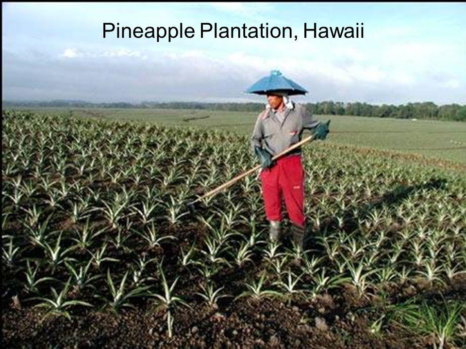 Pineapple Plantation, Hawaii