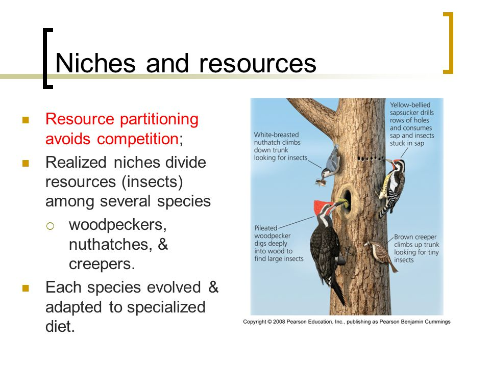 Niches and resources Resource partitioning avoids competition;