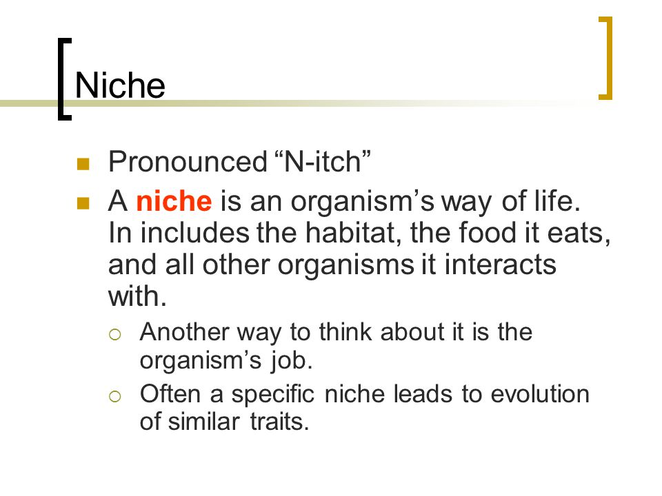 Niche Pronounced N-itch