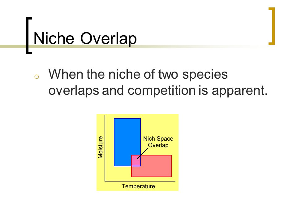 Niche Overlap When the niche of two species overlaps and competition is apparent.