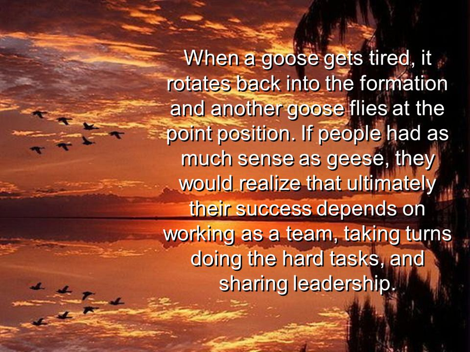 When a goose gets tired, it rotates back into the formation and another goose flies at the point position.