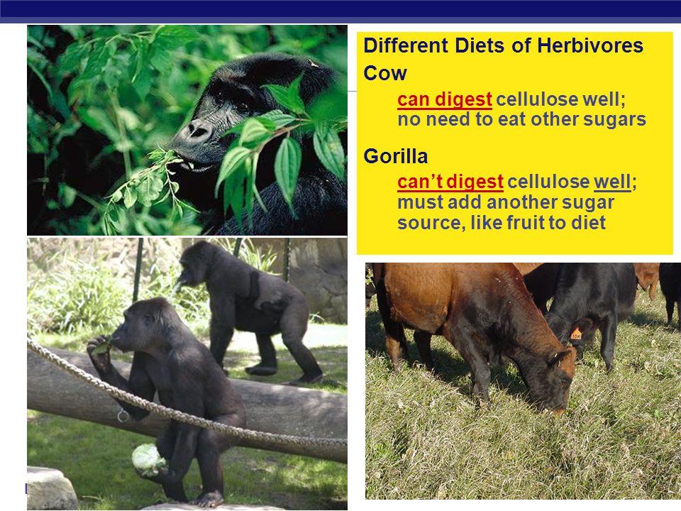 Different Diets of Herbivores Cow