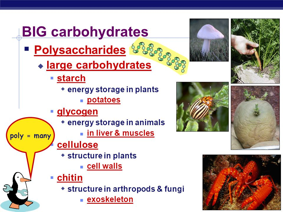 BIG carbohydrates Polysaccharides large carbohydrates starch glycogen