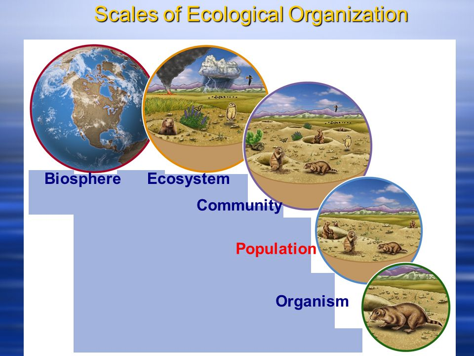 Scales of Ecological Organization - ppt download