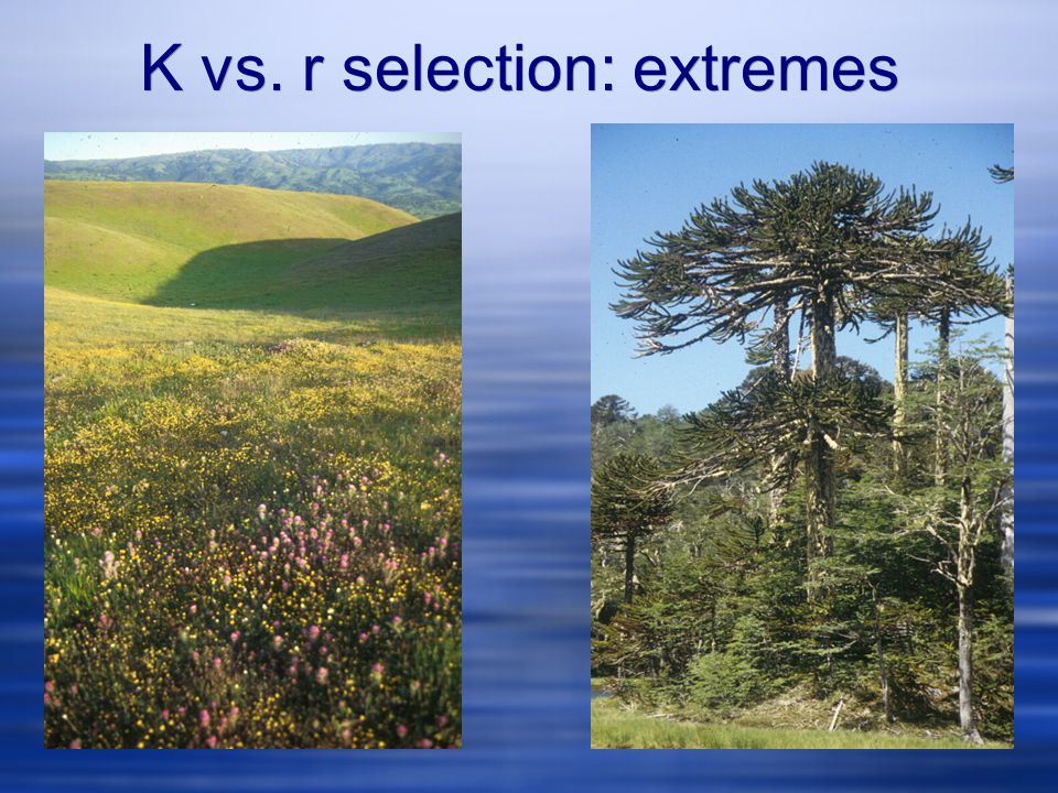 K vs. r selection: extremes