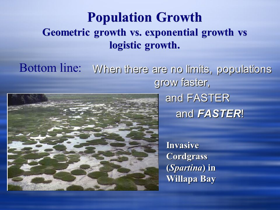 When there are no limits, populations grow faster,