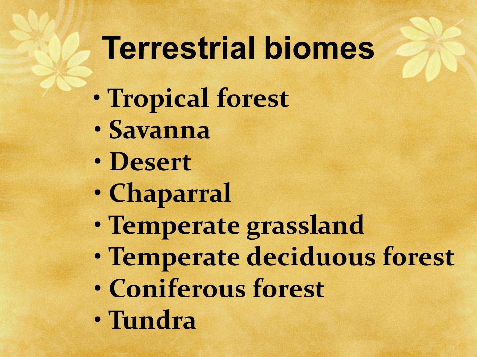 Terrestrial biomes • Tropical forest • Savanna • Desert • Chaparral