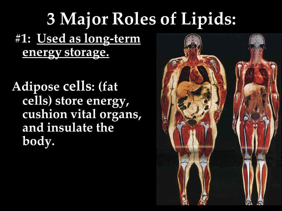 3 Major Roles of Lipids: #1: Used as long-term energy storage.