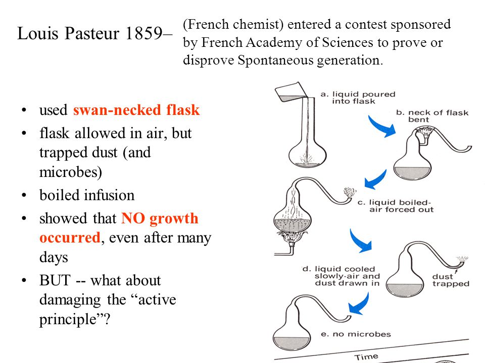 Louis Pasteur 1859– used swan-necked flask